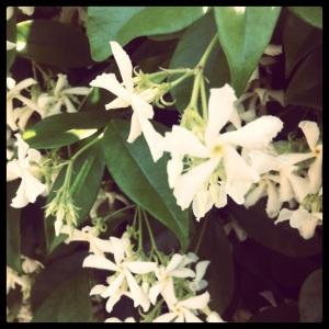 che poi magari dopo tutta sta solfa non sono manco biancospini, che ne so io di botanica?